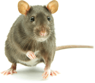 rodent pest control Boise Idaho